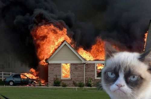 Burn Kitty
